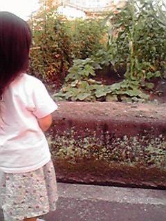 野菜も姫も成長〜