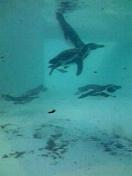 泳ぐの上手!