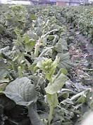 収穫&成長